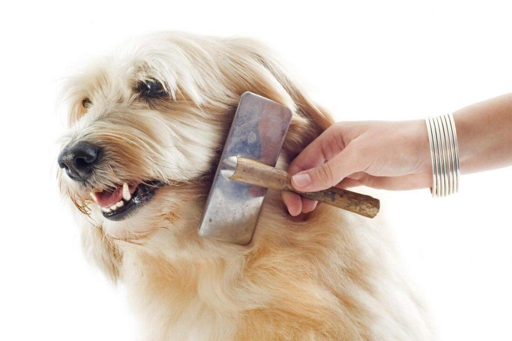 mobile pet grooming doral