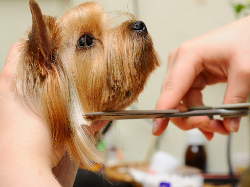 pet grooming doral