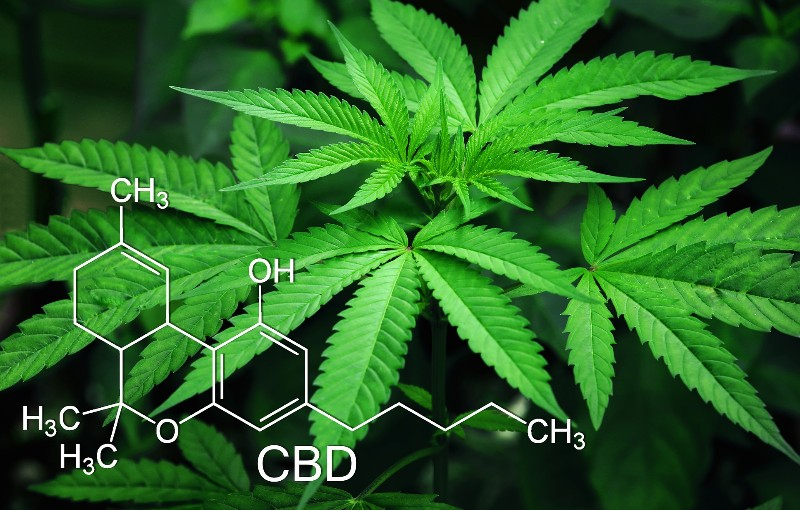 What are the benefits of using cbd oil?